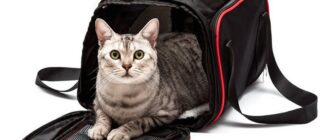 Товары для кошек с Алиэкспресс
